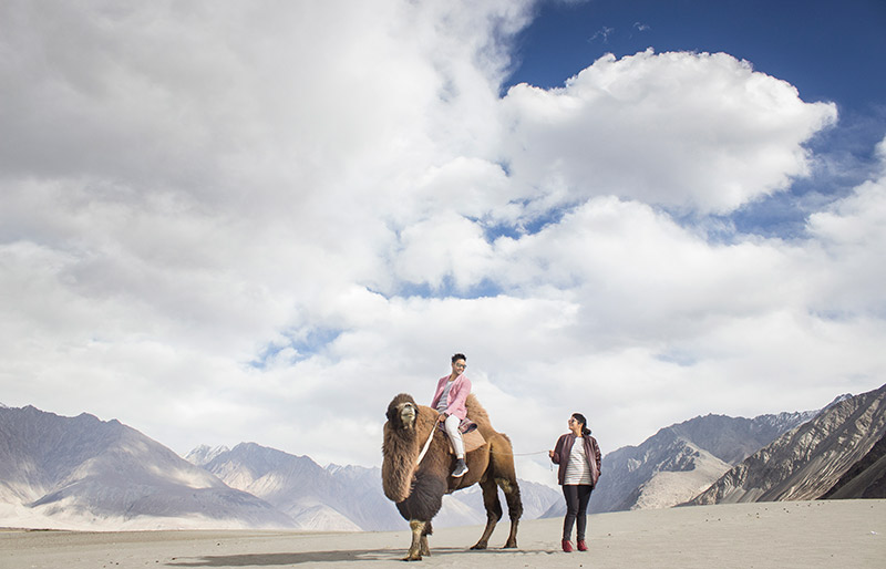 Bactrian camel ride with two humps