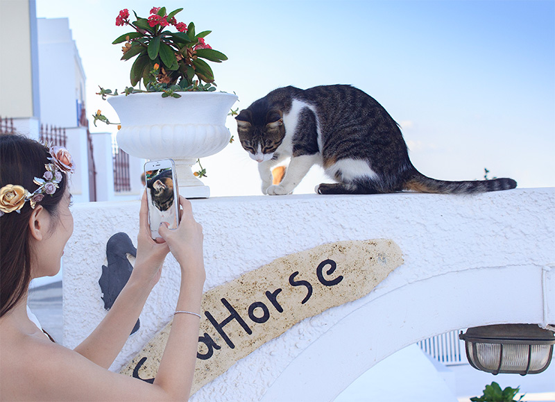 chinese bride photographing-cat